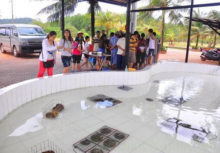 Một cơ sở có hồ nuôi ngọc mô phỏng