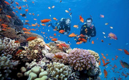Tour lặn ngắm san hô Phú Quốc 1 ngày kết hợp tham quan Nam Đảo